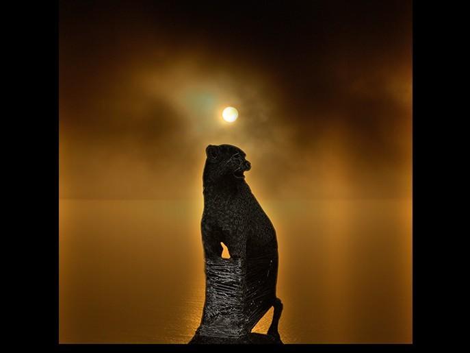 Tamed Beast
